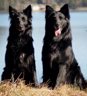 Haizee & Rossi